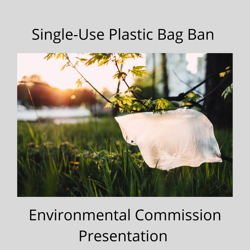 Single-Use Plastic Bag Ban